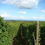 La route des vins Riquewihr
