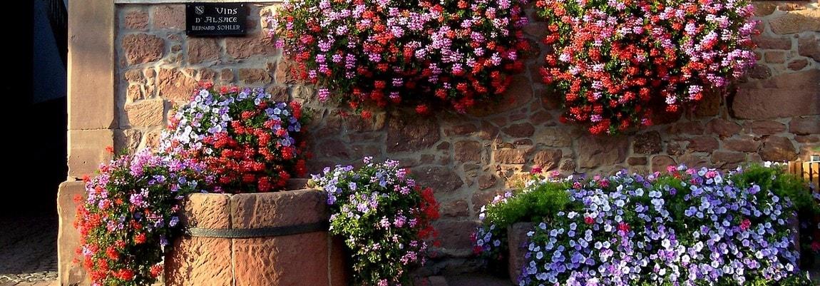 Tourisme en Alsace et dans les Vosges